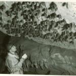 Norbert Casteret compte les rhinolophes bagués